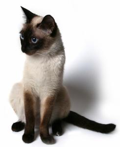 Усыпление кошек на дому