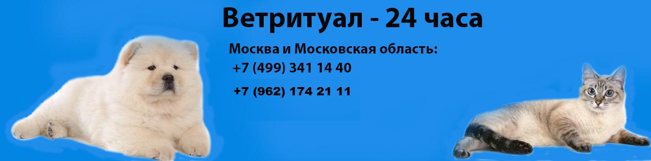Ветритуал24